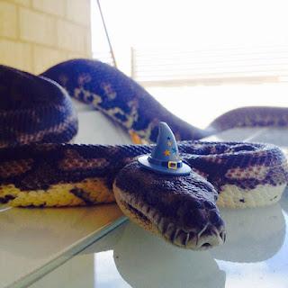 Una serpiente disfrazada de mago