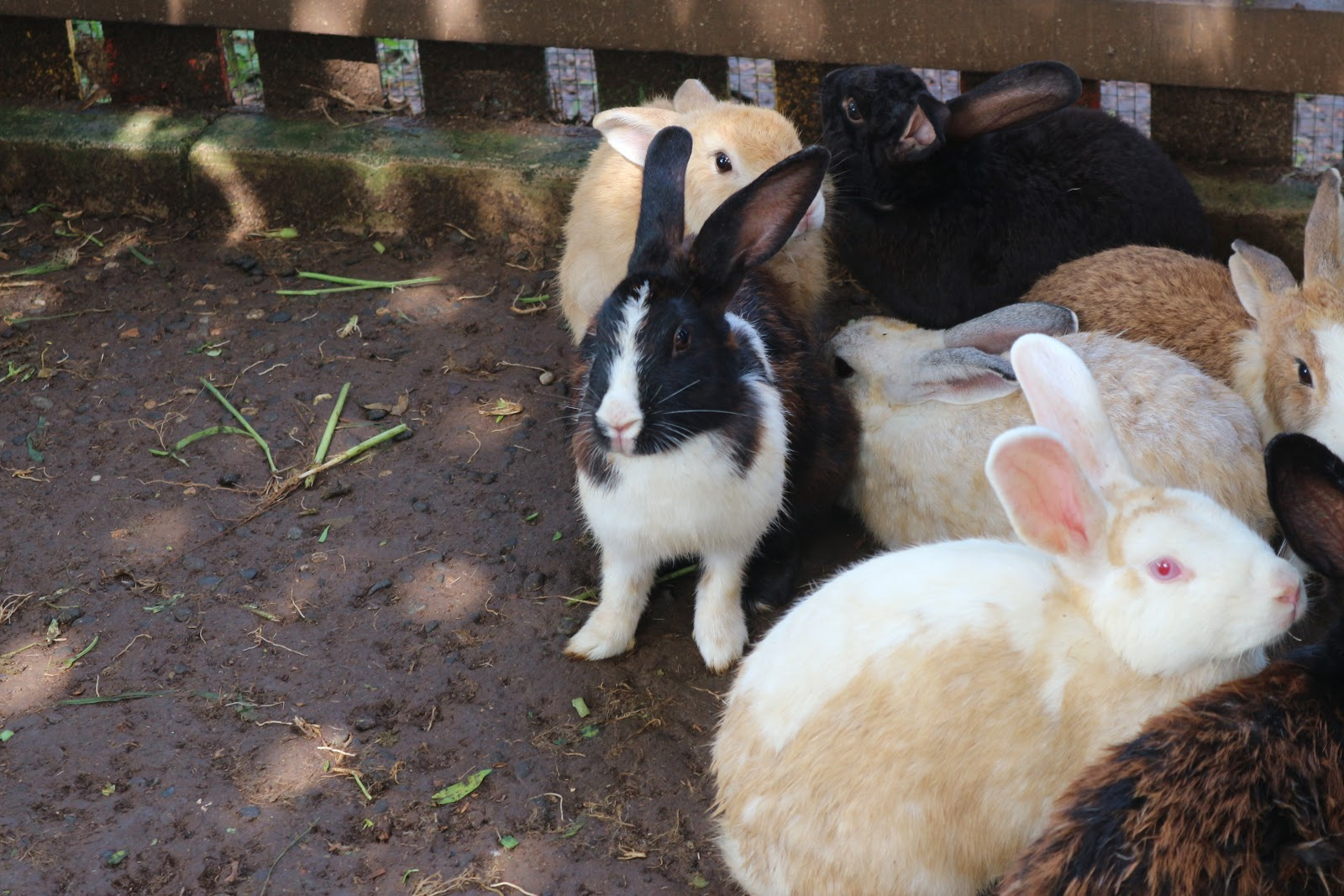 Staycation di Bogor yang lengkap sambil bermain bersama kelinci
