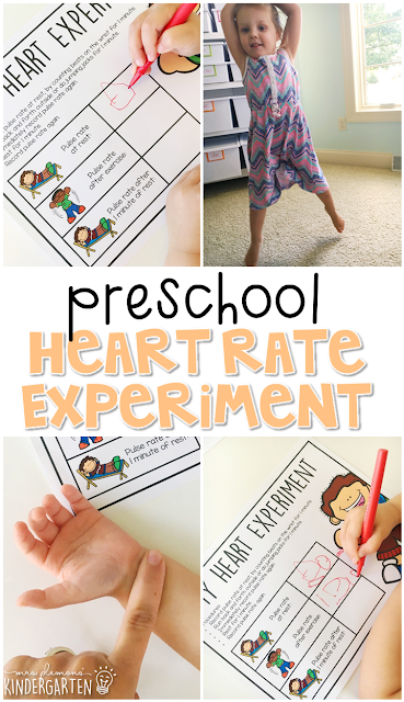 This heart rate experiment is a great way to learn about how our heart works. Great for a human body theme in tot school, preschool, or even kindergarten!