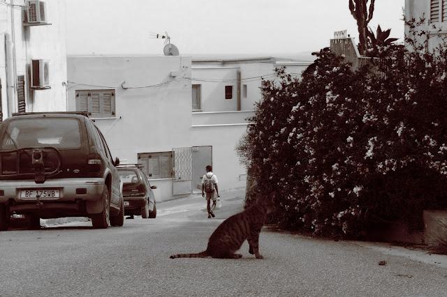 Wyspy Egadzkie Levanzo kot