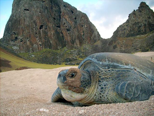 Arquipélago Trindade-Martim Vaz é abrigo para espécies ameaçadas © ICMBio