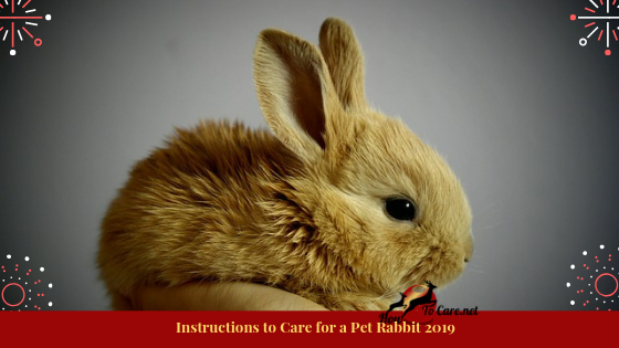 They have explicit needs so as to carry on a long, glad and solid life. Here is an essential review on the most proficient method to think about a pet rabbit: