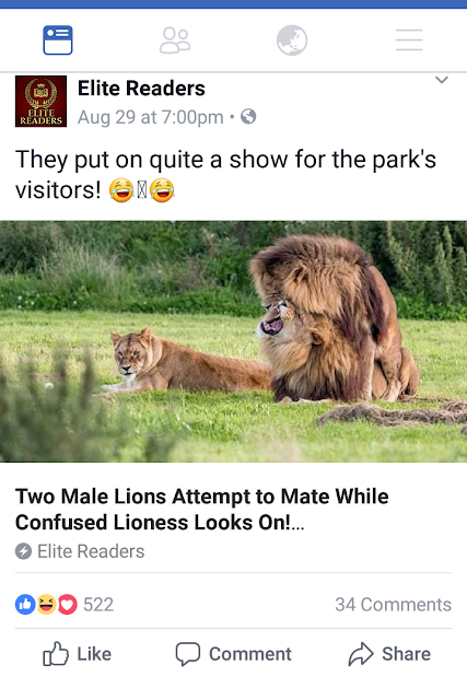 http://www.dailymail.co.uk/news/article-4829510/Two-male-lions-appear-mate-lioness-looks-on.html