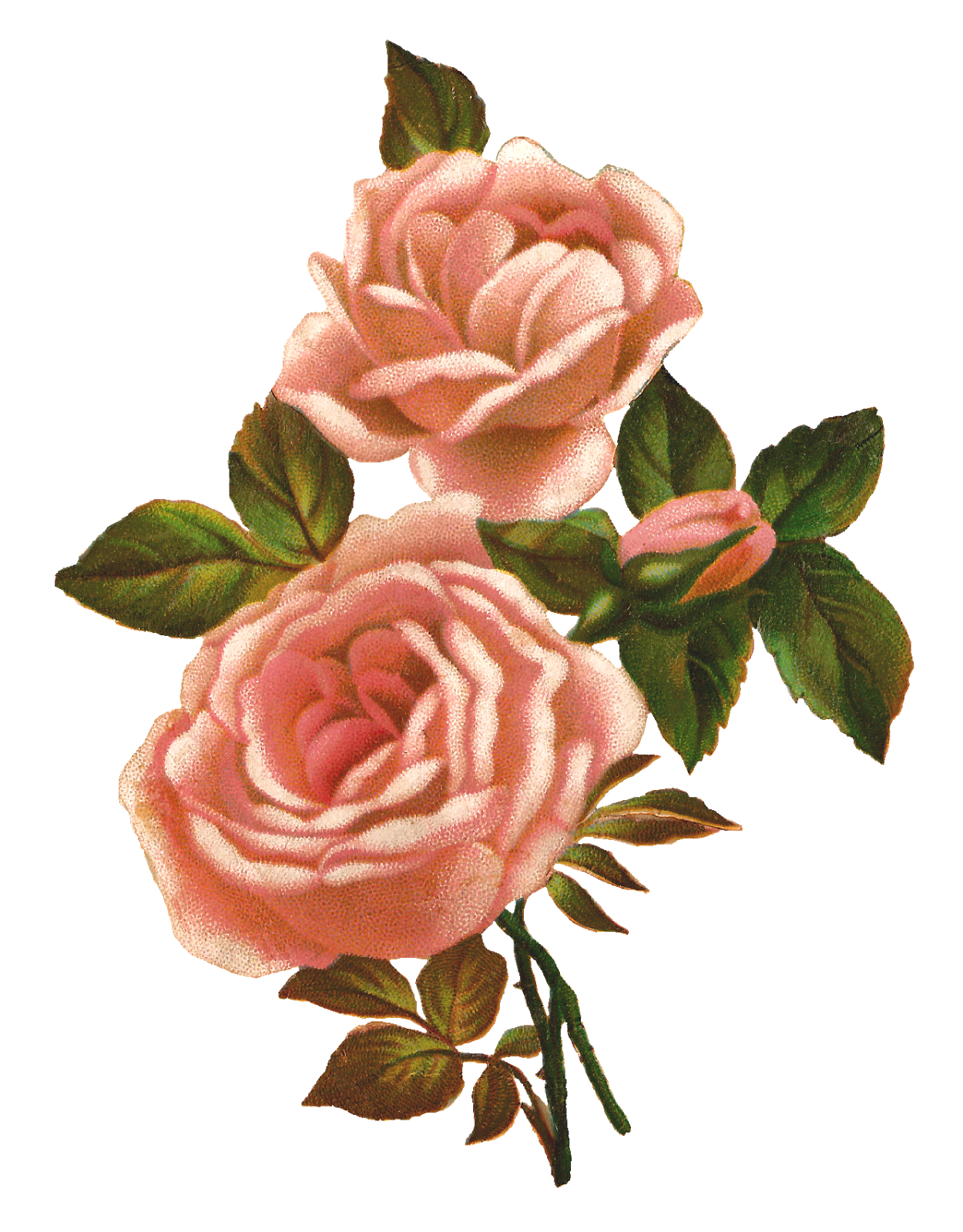 Antique Images: Pink Rose Stock Image Vintage Shabby ...