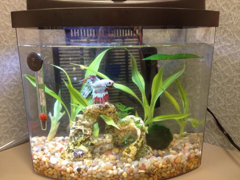 5 Tipe Akuarium Dan Wadah Untuk Memelihara Ikan Cupang Hobi Ikan Mania