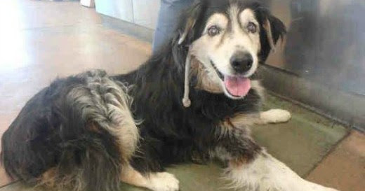 Terrified 17-Years Old Surrendered And Deserted At High Kill Shelter By His Family