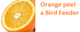 Orange peel a Bird Feeder - Oranges citrus fruit peel (Santre Ke Chilke)