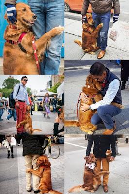 Anjing Ini Jadi Viral Lantaran Memeluk Semua Pejalan Kaki Di New York