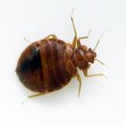 http://www.bugzpestcontrolsydney.com.au/