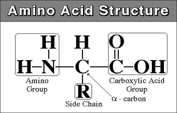 Protein dan Asam Nukleat sebagai Komponen Kimiawi Sel