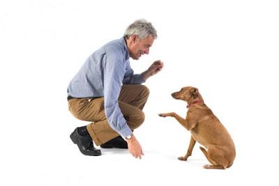 Potrebno je vreme vlasnicima i psu da se naviknu na novonastale okolnosti