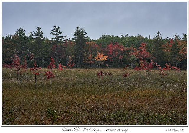 Witch Hole Pond Loop: ... autumn showing...