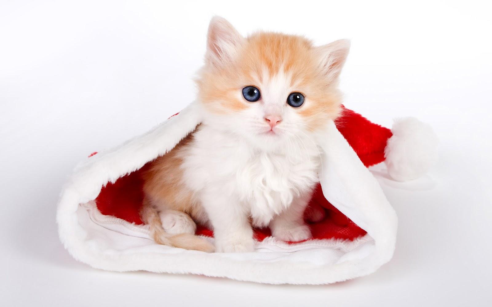 24+ Gambar Kartun Lucu Dan Imut Kucing Tahun Ini