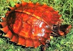 Daftar Terbaru Reptil Yang Dilindungi