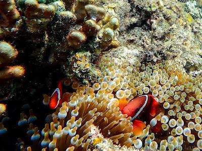 Snorkeling-Papaya-beach-Bacuit-Corong-Corong-El-Nido-Palawan-Philippines