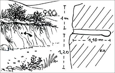 Durmilí Nystalus maculatus