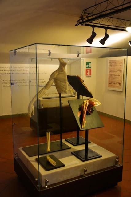 STUDI-ANATOMICI-MUSEO-LEONARDIANO