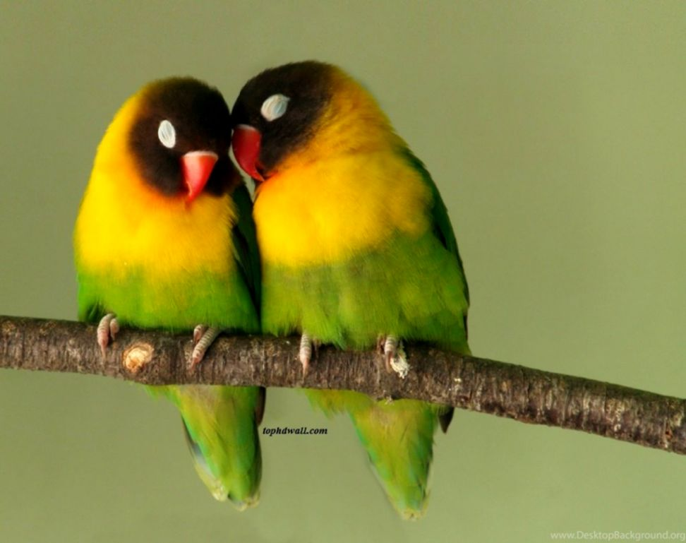 Images Cute Birds Fall Love Hd Desktop | Wallpapers Library