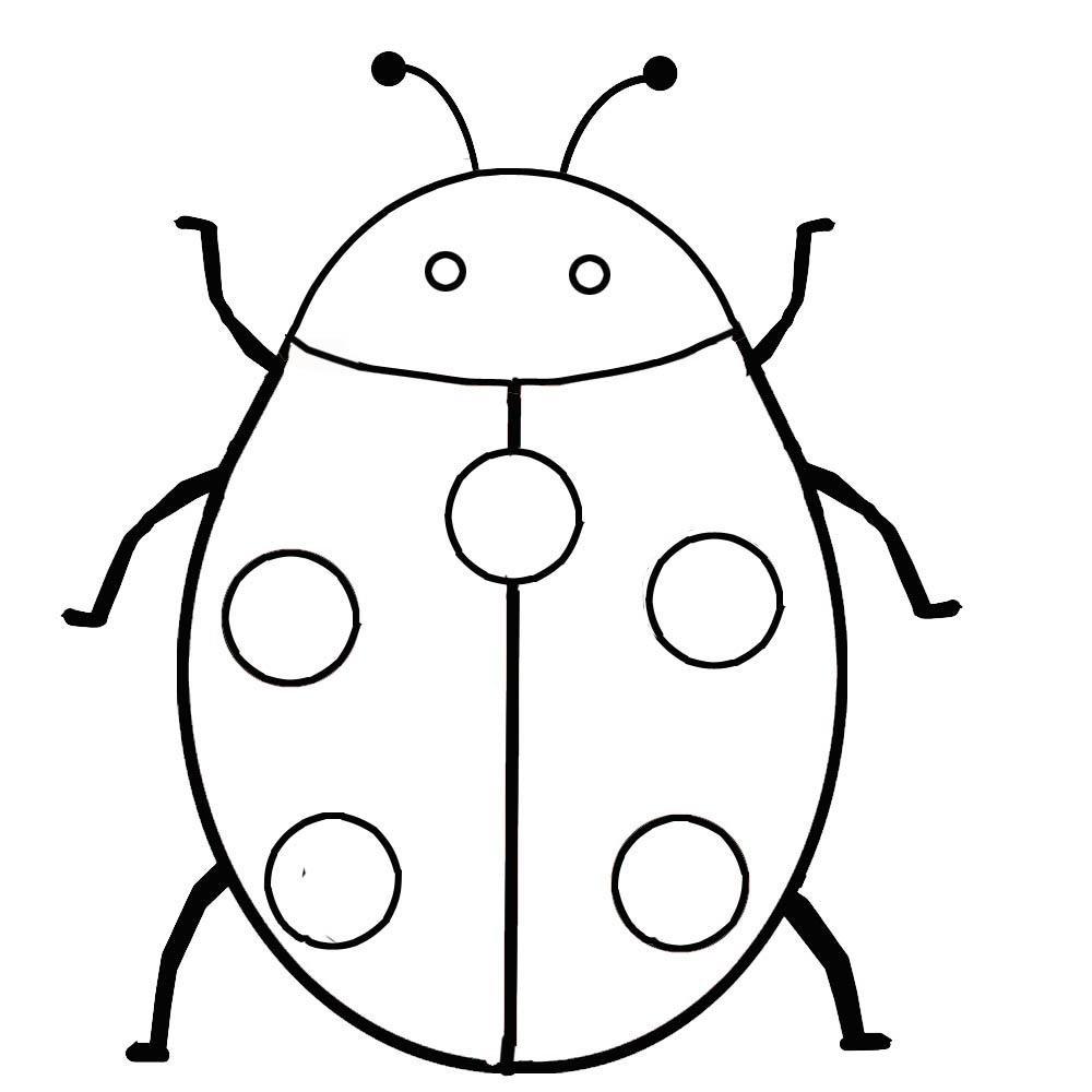 Fotos De Insectos Para Imprimir