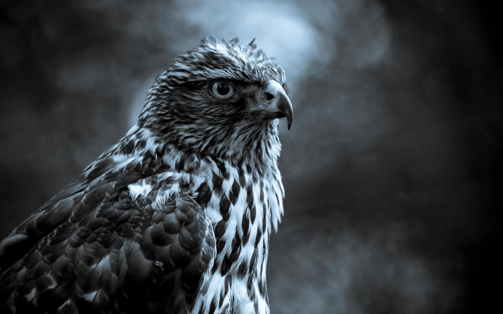 Fabulous And Amazing Eagle Wallpapers in HD - For More ...