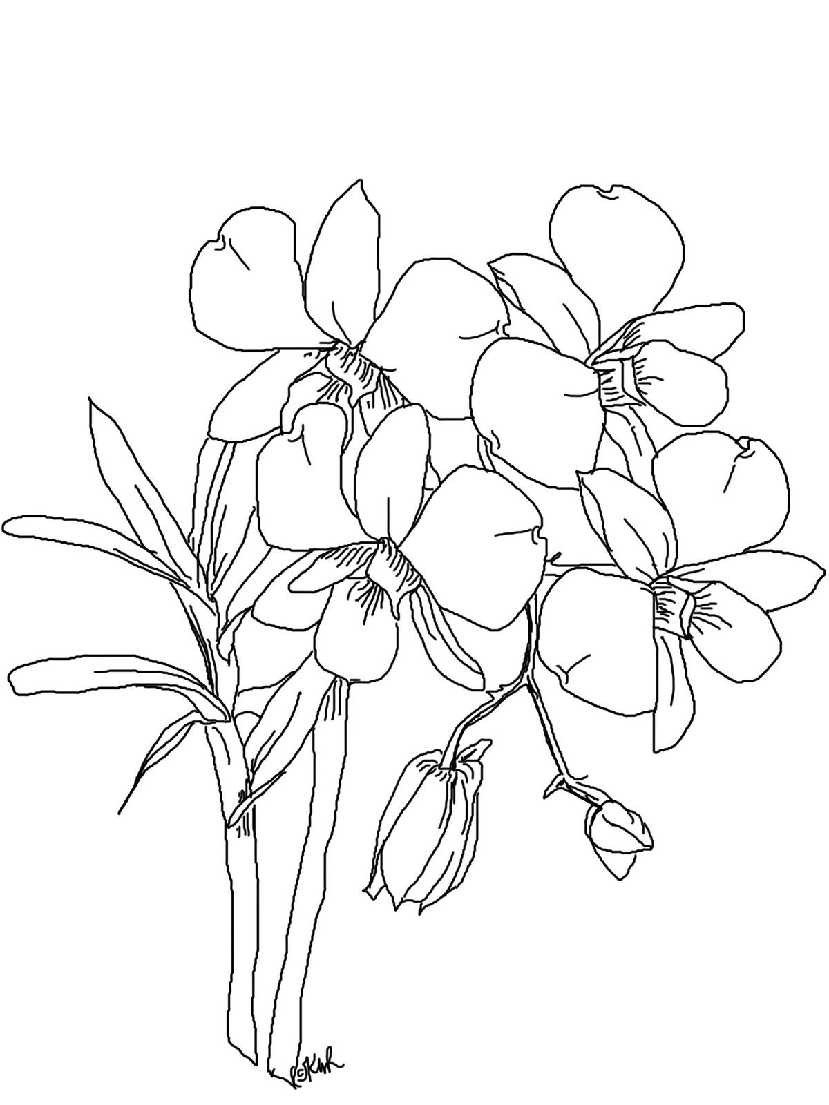 Orchid Flower Line Drawing : The kitchen table crafter free digi sketch phalaenopsis