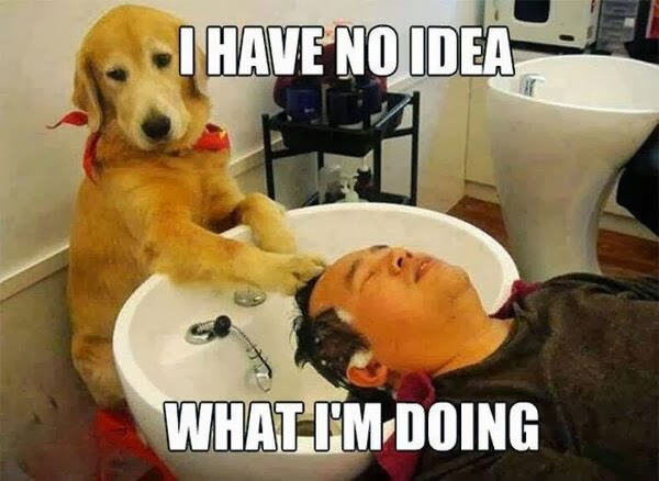 Funny dog washing mans hair
