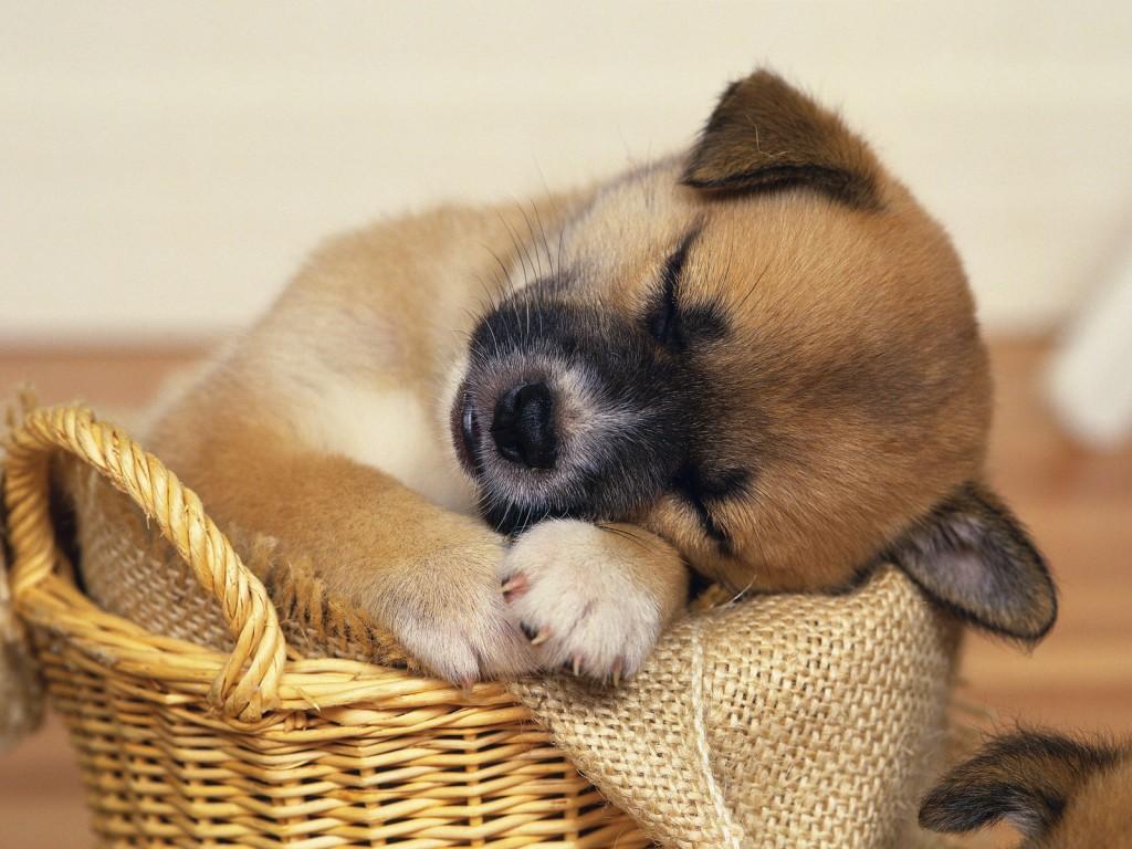 Puppy And Kitten Sleeping Sleeping Puppie...