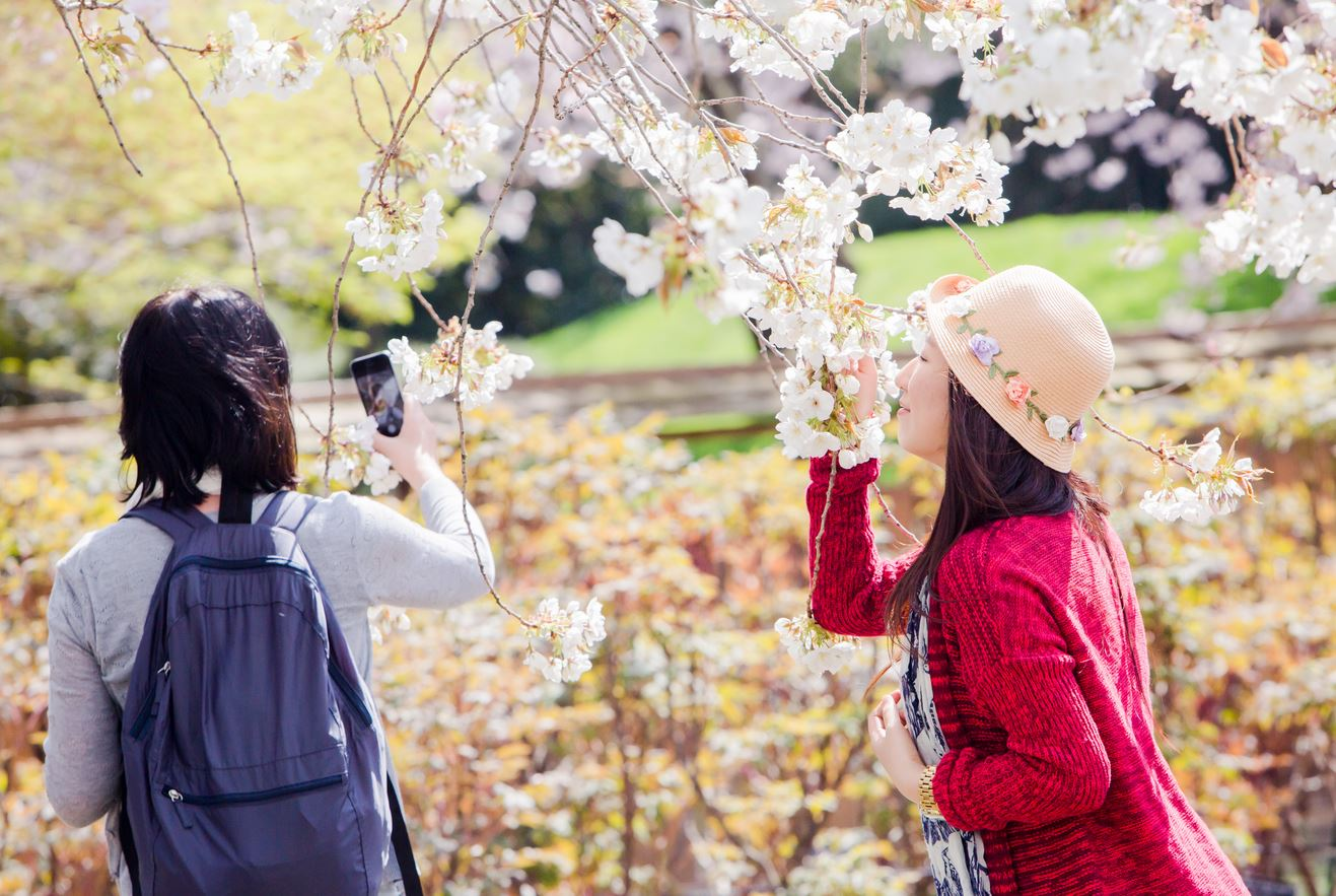 Two ladies smelling the cherry blossoms sakura matsuri at the brooklyn botanical gardens