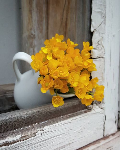 مزهرية ورد باللون الاصفر