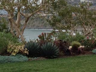 Trees, succulents, grass landing, Heisler Park, Laguna Beach, CA