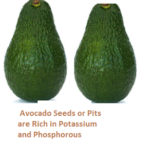 Avocado Seeds or Pits are Rich in Potassium and Phosphorous