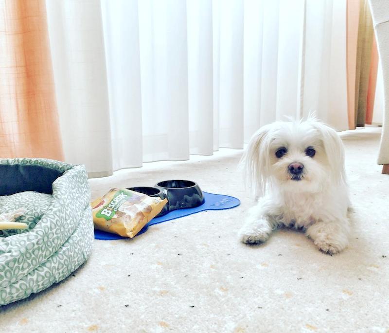 sofitel hotel z psem, hotel wrocław hotel dogfriendly, wakacje z psem wrocław, hotel z psem, hotel pies