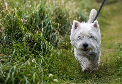 Protection contre les tiques chez le chien