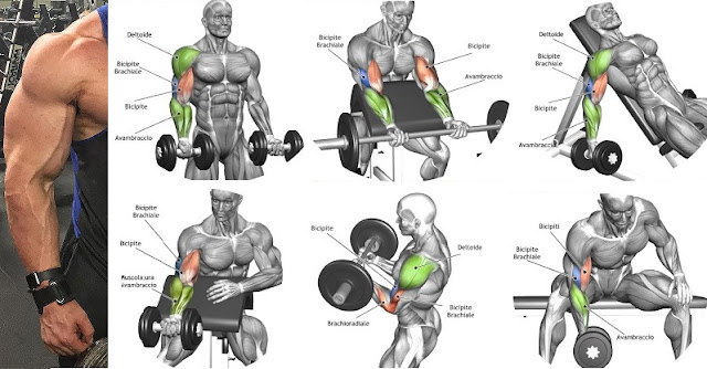 The-Best-Bicep-Workout-For-Mass