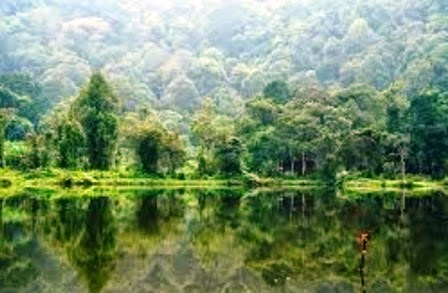 Keanekaragaman Hayati Gen Jenis Dan Ekosistem Artikelsiana