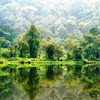 Keanekaragaman Hayati, Gen, Jenis dan Tingkat Ekosistem
