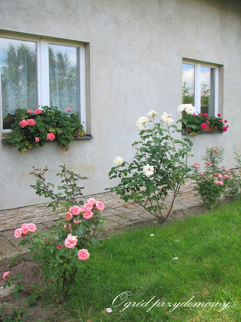podumowanie roku, ogród przydomowy