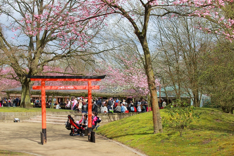 Impossible isn 39 t kitchible hanami au jardin japonais d for Jardin japonais hasselt 2016