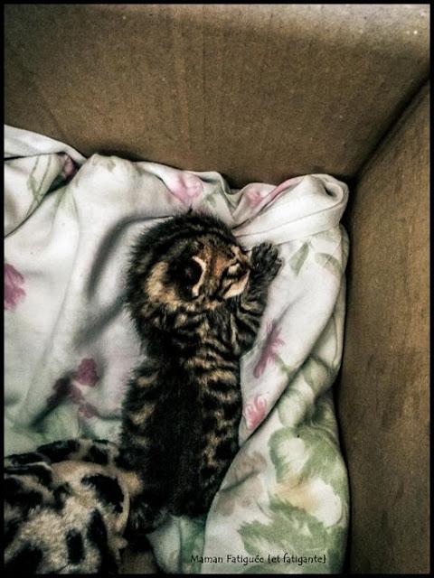 sauvetage chaton famille