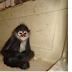 Asegura Profepa 11 ejemplares de vida silvestre en casa en Motul