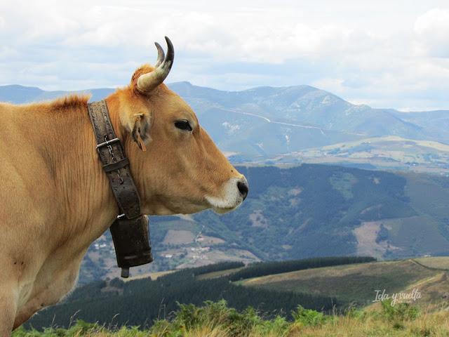 Razones para ir a Cangas del Narcea vaque