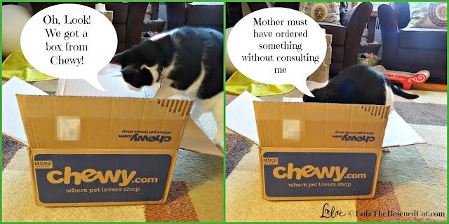 chewy.com|kong|treat dispenser