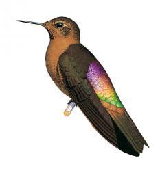 el mundo del colibri