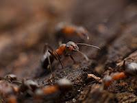 Makna Kehidupan Semut yang Bisa Diambil Hikmahnya