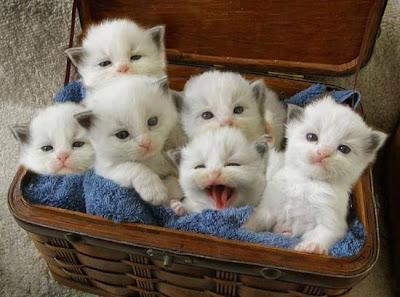 filhotinhos de gato