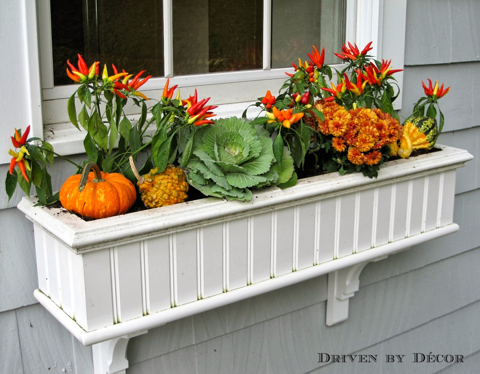 My Fall Window Boxes | Driven by Decor