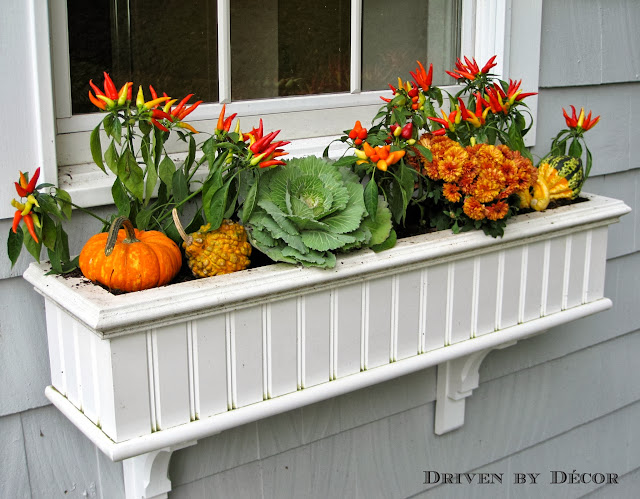 My Fall Window Boxes Driven By Decor Magnificent Decorating Window Boxes For Fall