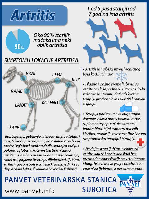 Artritis kod pasa infografika