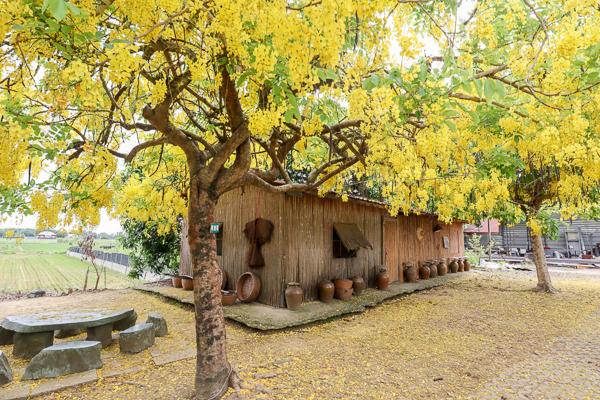 台南白河大山宮竹管屋阿勃勒,吸引大批網美和攝影師來朝聖