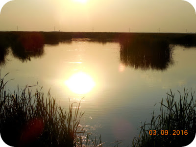 Delta de la tara